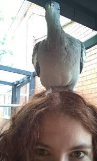 gaston on my head